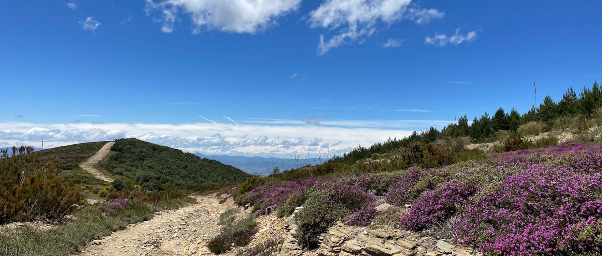 Camino Frances / Französischer Jakobsweg