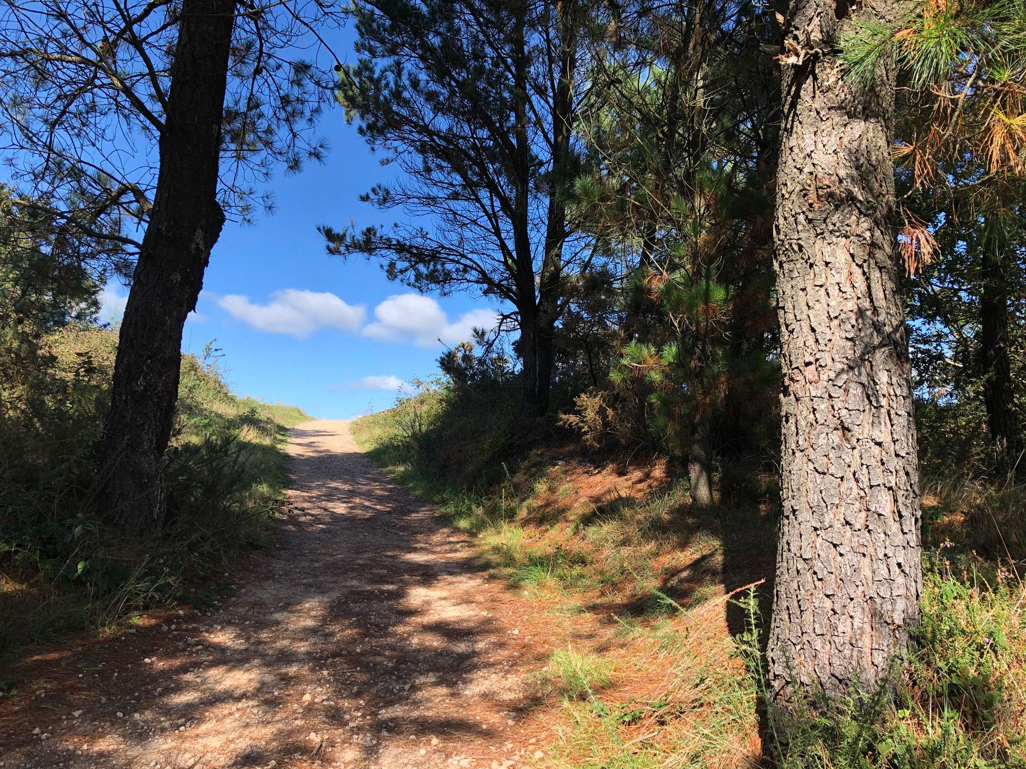 Wandern im Wechsel von Wald und Feld hinter Negreira