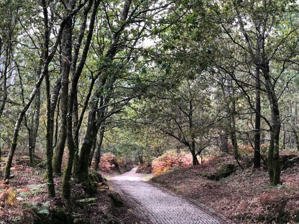 Die erste Etappe des Camino Finesterre zwischen Santiago und Negreira