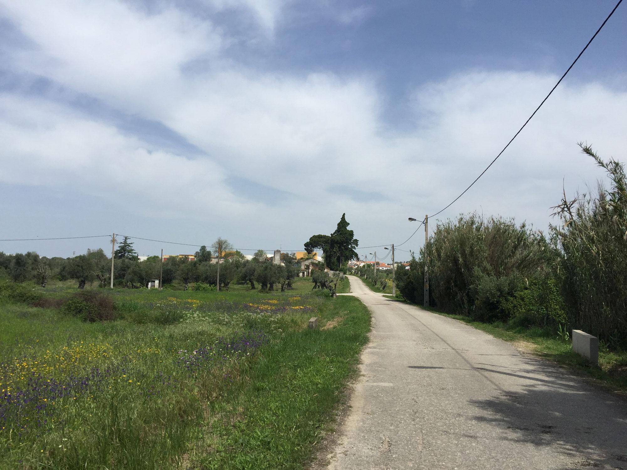 Asphaltwandern in der Nähe von Petregosa auf dem portugiesischen Jakobsweg ab Lissabon