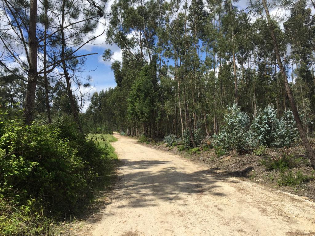 Pilgerweg bei Santa Luzia