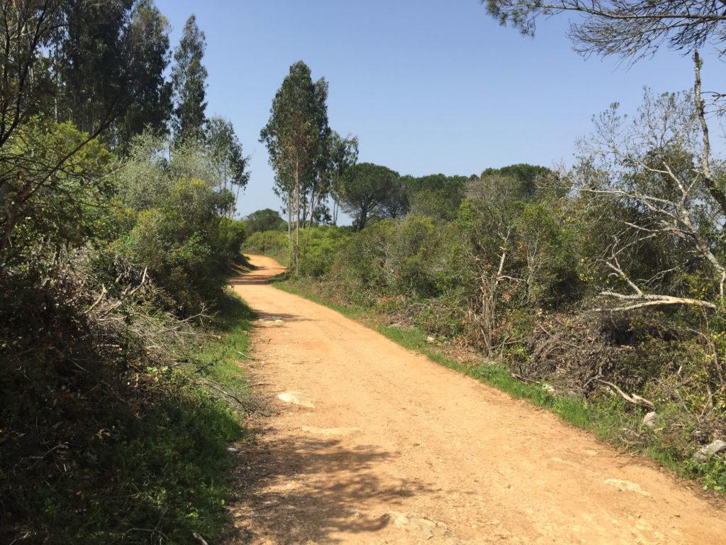 Wanderweg Lissabon-Porto, südlich von Condeixa-a-Nova