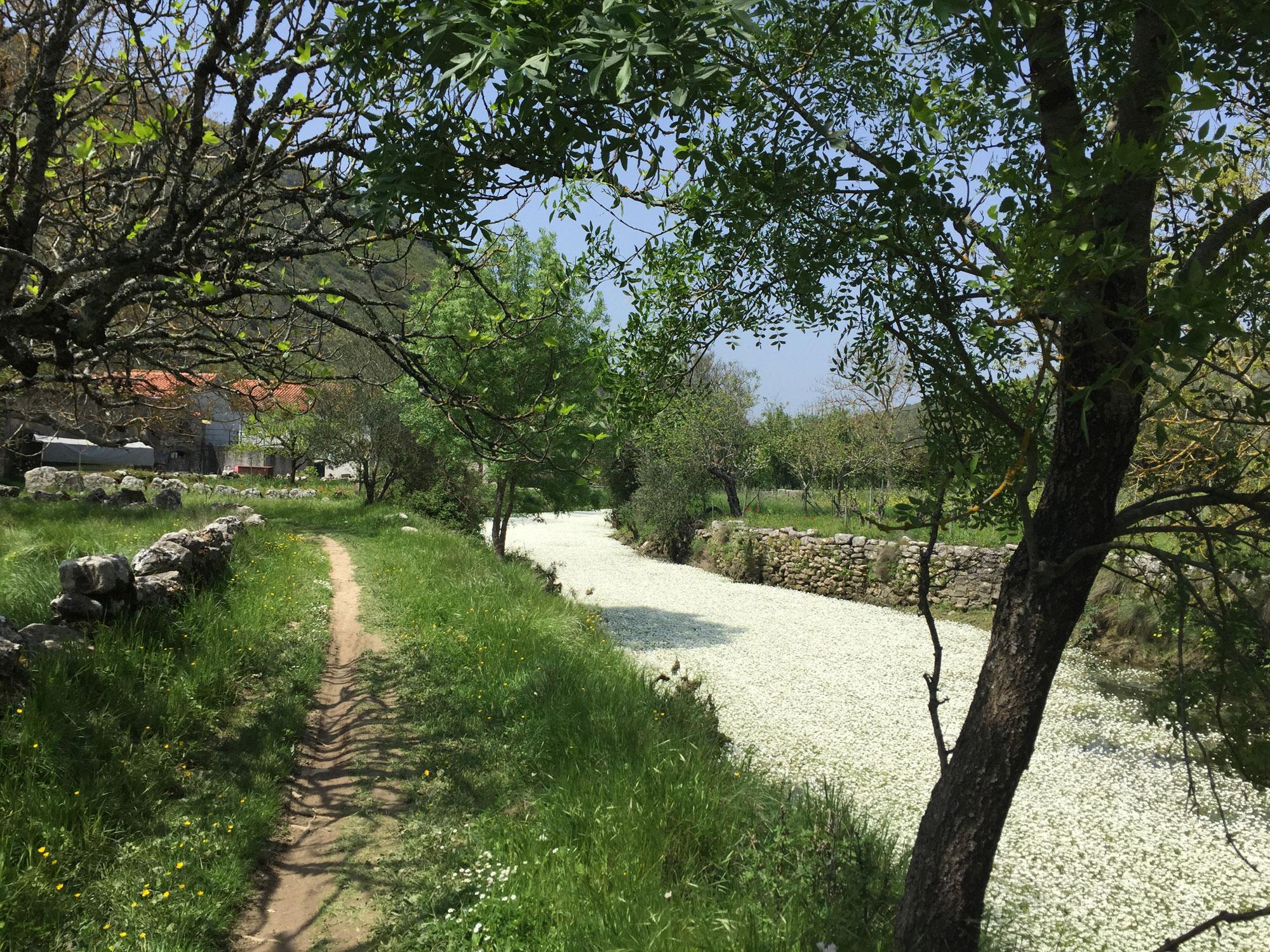 Pilgerweg am mit Blüten gefülltem Fluss
