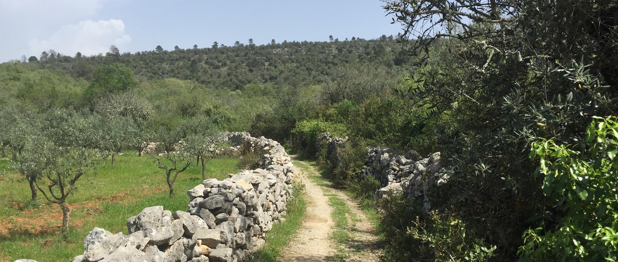 Der Portugiesische Jakobsweg
