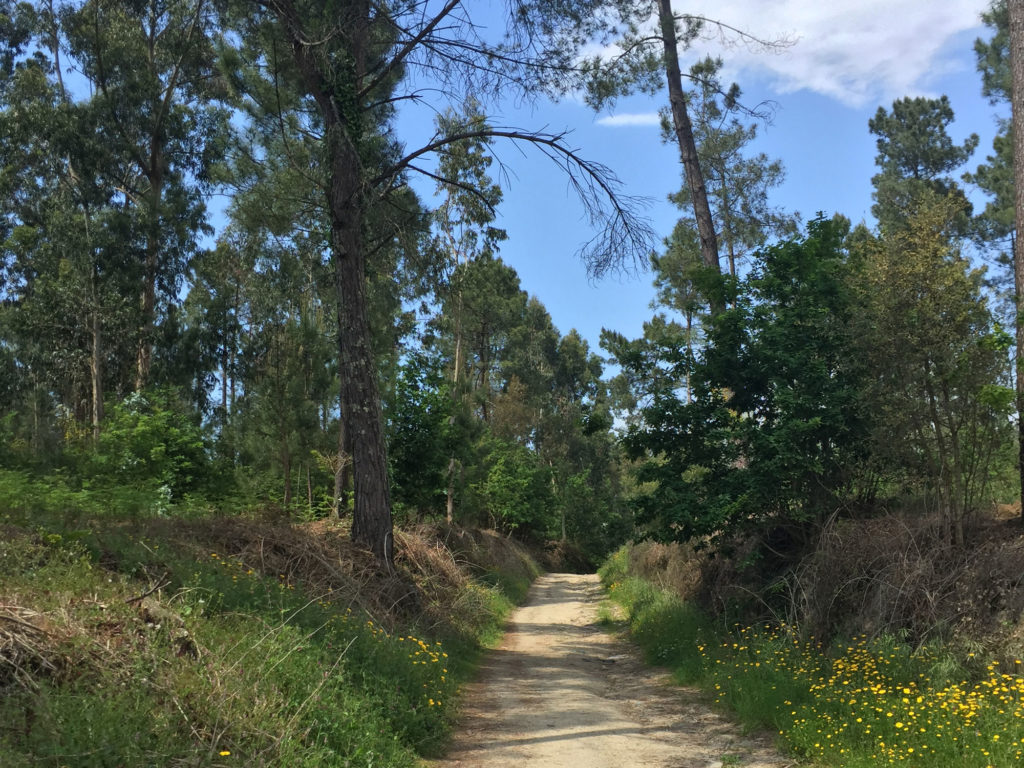 Wandern durch die Natur in der Nähe von Barcelos auf dem Inlandsweg