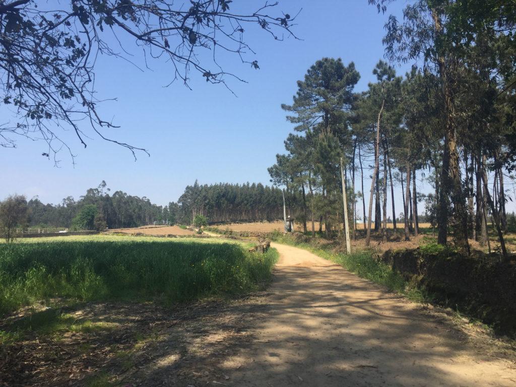 Pilgerweg in der Nähe von Rates (Inlandsvariante des portugiesischen Jakobswegs)