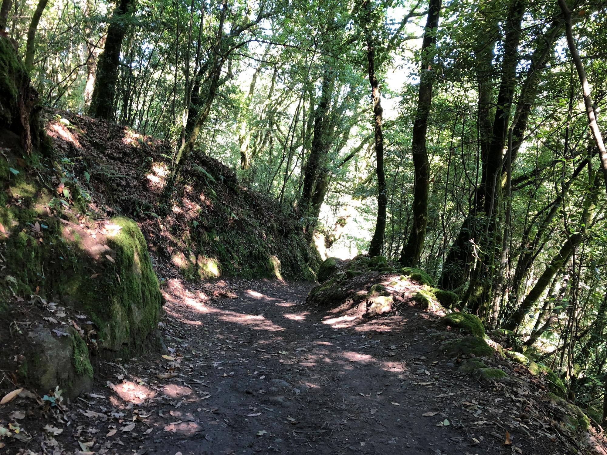 Wald auf dem gemeinsamen Weg vor Padron