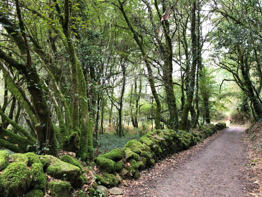 Wald bei Pontevedra auf dem gemeinsamen Abschnitt der portugiesischen Wege
